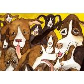 Koirat-postikortti